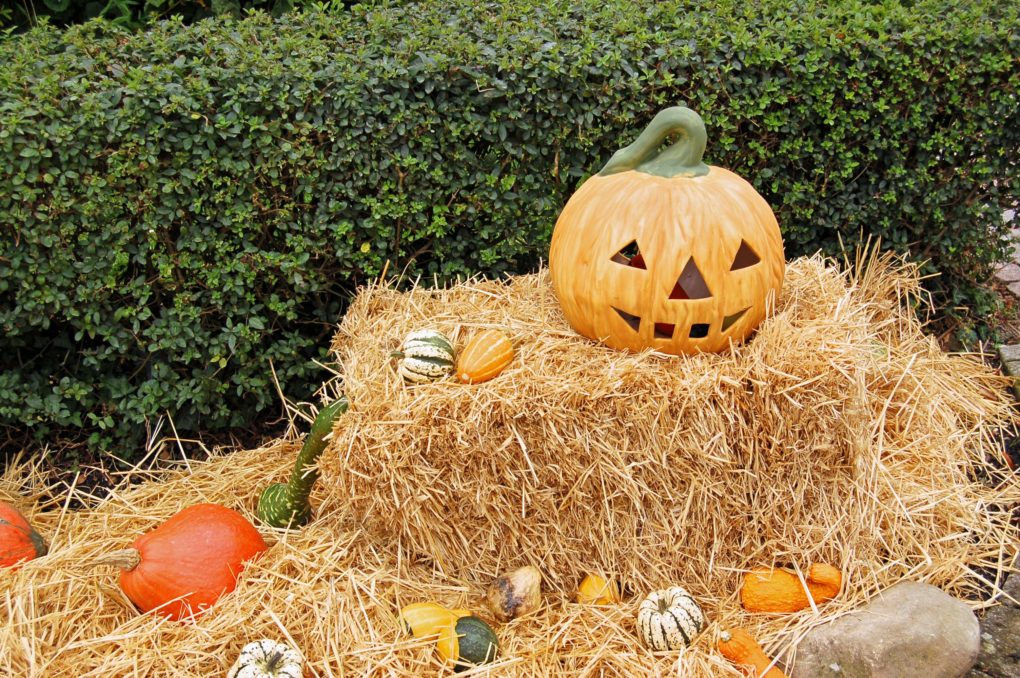 Things to Do for Halloween Inland Empire | Fiesta Village